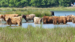 Wandern Sie vom Camping Zwinderen in Drenthe aus durch die Umgebung von Gees