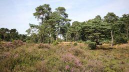 Ontdek de Hondsrug vanuit Camping Zwinderen in Drenthe