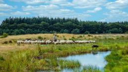 Fiets of wandel door de Hondsrug vanuit Camping Zwinderen in Drenthe