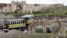 Beleef Wildlands Safari vanuit Camping Zwinderen in Drenthe